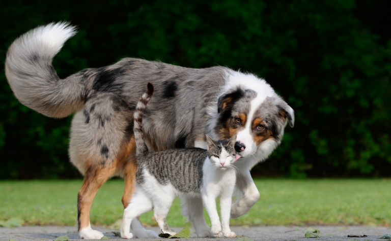Huidverzorging voor dieren