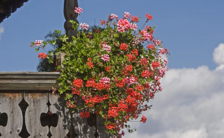 Wat zit er achter de geraniums?