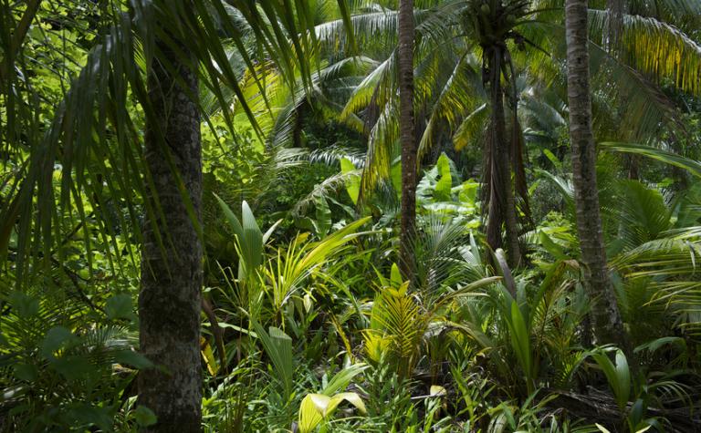 Is het uitsterven van planten een bedreiging voor onze gezondheid?