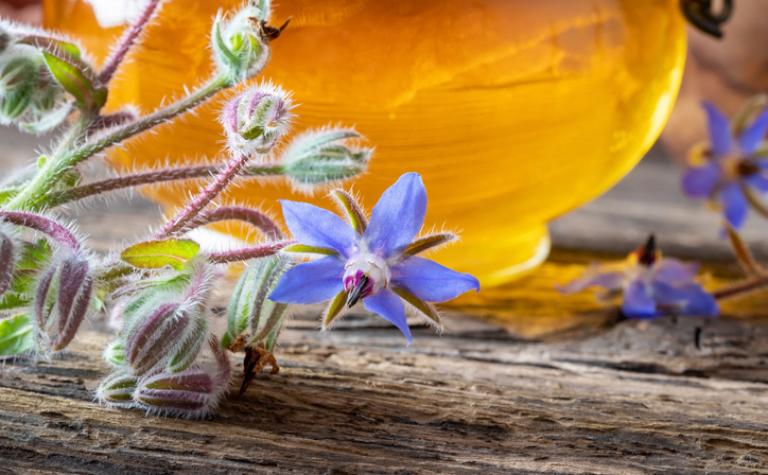 Olie ola, alfa bèta gammalinoleenzuur