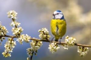 Meidoorn 10 beste rustgevende kruiden
