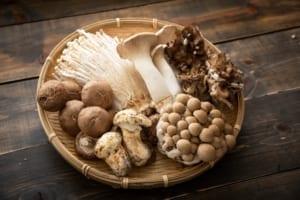 oosterse paddenstoelen