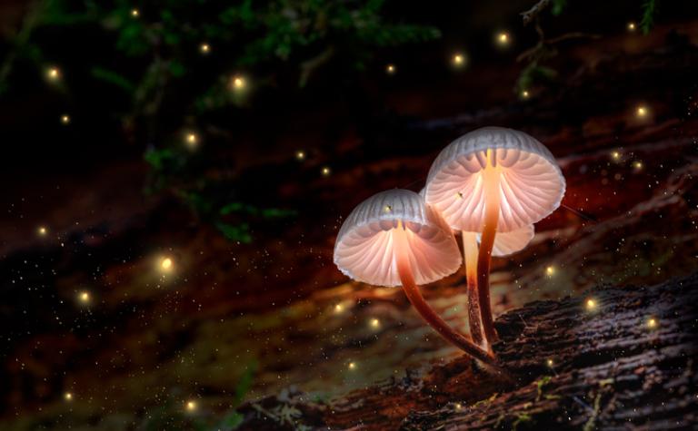 De magische kracht van paddenstoelen