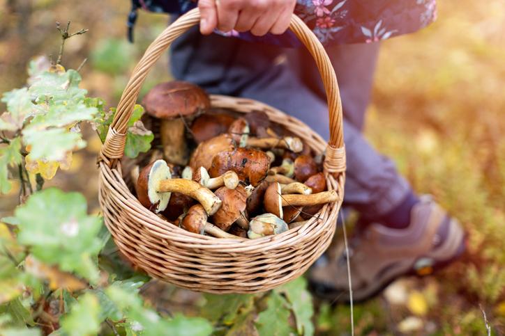 mandje paddenstoelen
